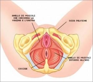vagina-2